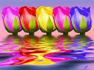 what color are tulips tulips rainbow color rainbow