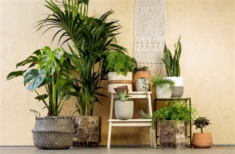 indoor plant styling whats hot   homely