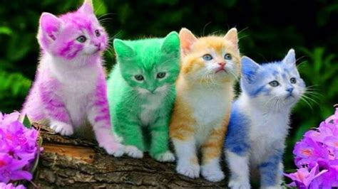 cute kitten cat colorful learning color video  kids