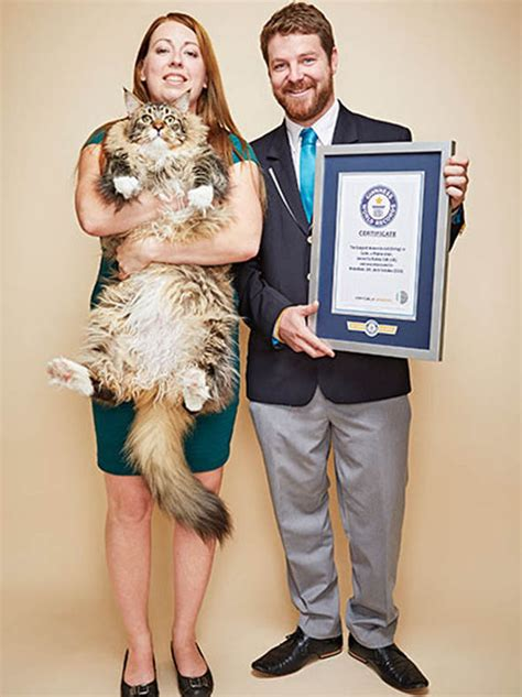 Records Maine Maine Coon Ludo Awarded Place In Guinness World Records 2017 Edition Nature News