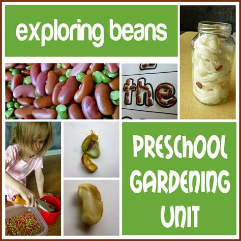 preschool garden ideas 17 best images about planting ideas crafts on