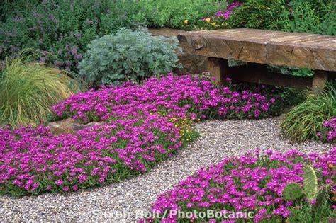 drought resistant flowering shrubs drought tolerant chanticleer drought tolerant garden
