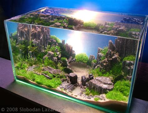 Aquascapes Online 2008 Aga Aquascaping Contest Now Online Why Dont We Have