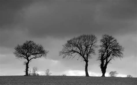 grey wallpaper with trees desktop background of three trees on the horizon