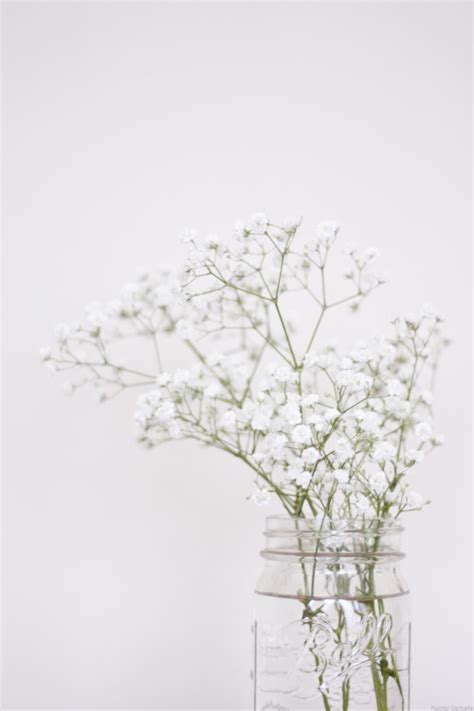 aesthetic white aesthetics white flowers pictures to pin on pinsdaddy