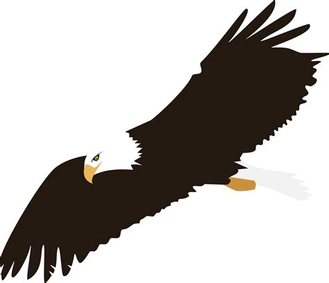 eagle clipart soaring bald eagle vector clipart image free stock photo