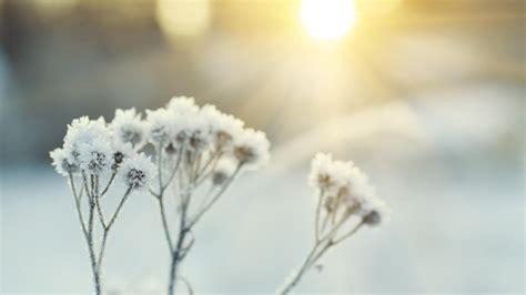 Garten Pflanzen Januar by Gartenkalender Das Ist Im Januar Im Garten Zu Tun