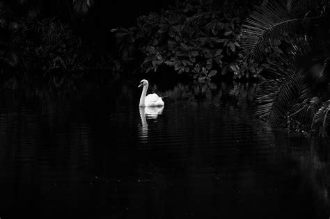 mesick photography  blog