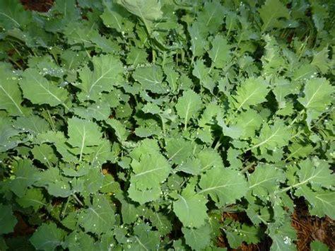 Kale Garden by Getting A Jump On The Gardening Season Veggie