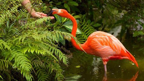 flamingo gardens in fort lauderdale florida expedia
