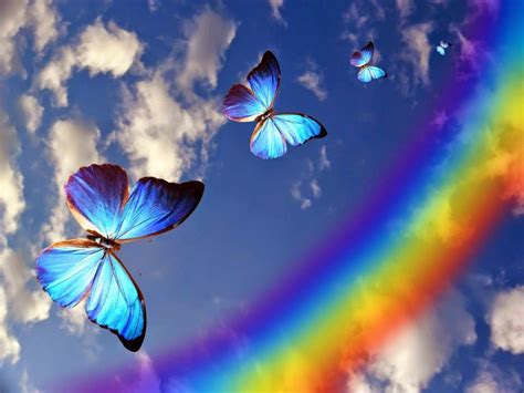 imagenes de mariposas en vuelo medicina de mariposas para alma y cuerpo