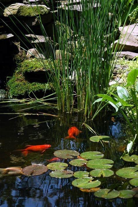 backyard bassin backyard bassin 11 best bassin images on pinterest water