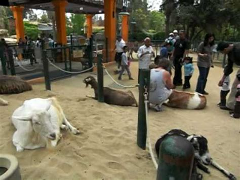 Zoo Section by Goats In The Children S Zoo Section Of Los Angeles Zoo