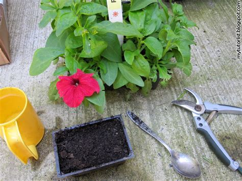 how to propagate petunias from cuttings behind