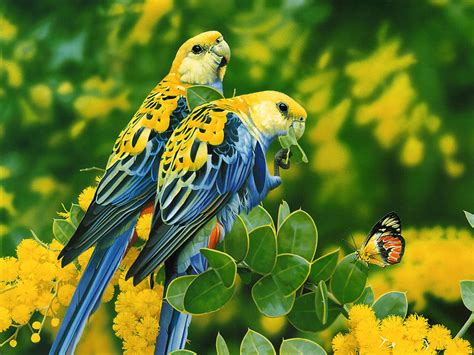 Wallpaper With Birds | wallpapers love birds wallpapers