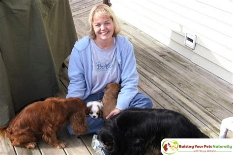 puppy socialization near me how to research breeders how to find a puppy breeder raising your pets