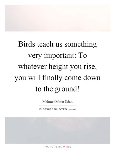 birds teach us something very important to whatever
