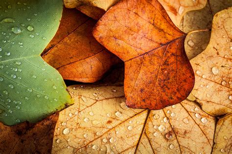 imagenes de otoño en suecia fondos oto 241 o wallpapers autumn fondos de pantalla de oto 241 o