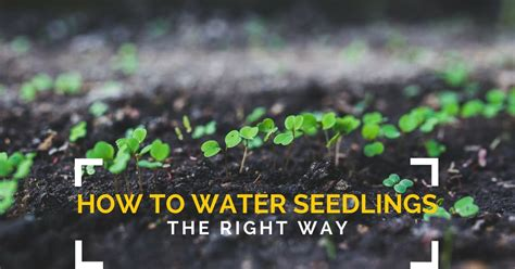 water seeds  seedlings gardening channel