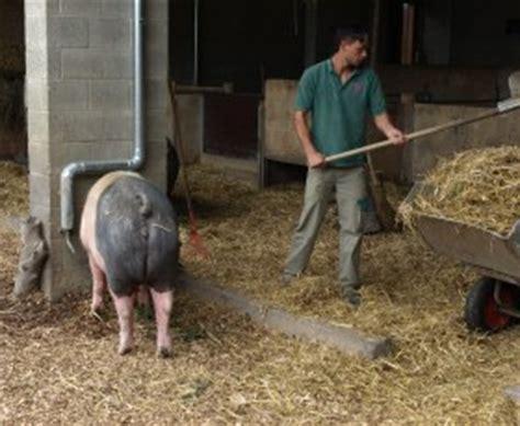 schweinestall bauen landwirtschaftliches bildungszentrum in echem wird