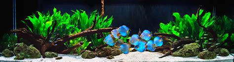 Aquarium Design Group Discus | aquarium design group simple beauty of a planted discus