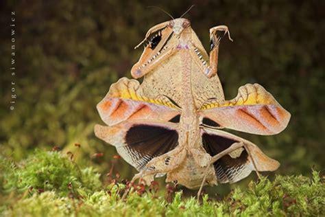 imagenes de animales extraños animales curiosos taringa