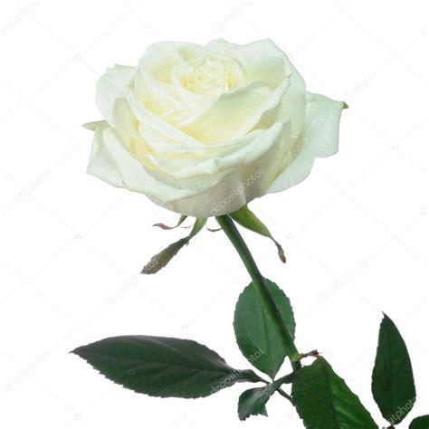 libro rosa blanca rose blanche rose blanche photo 1533550