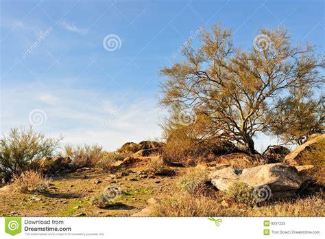 arizona desert landscape royalty free stock photo image