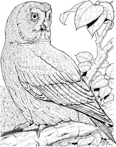 owl butterfly coloring page coloriage chouette lapone coloriages 224 imprimer gratuits