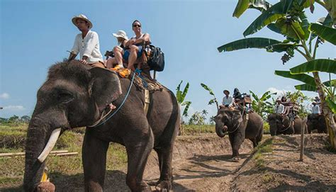 bali elephant ride tour bali elephant ride tour excellent service bali custom tour