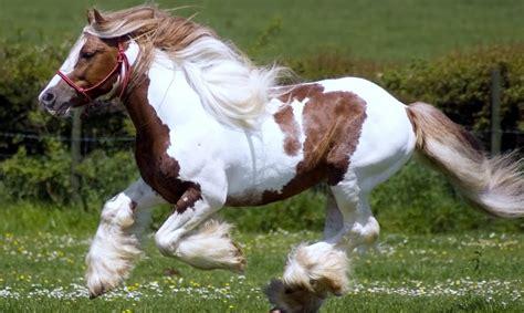 fotos de penes super finos los caballos mas finos del mundo pura sangre youtube