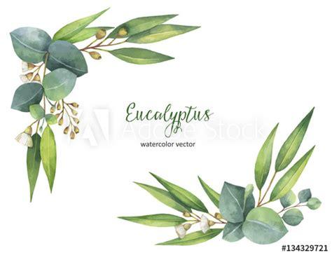 Eukalyptus Pflanze Kaufen 97 by Eukalyptus Pflanze Kaufen Interesting Best
