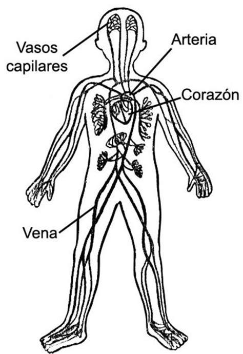 imagenes asombrosas del cuerpo humano 15 mejores im 225 genes de cuerpo humano en pinterest
