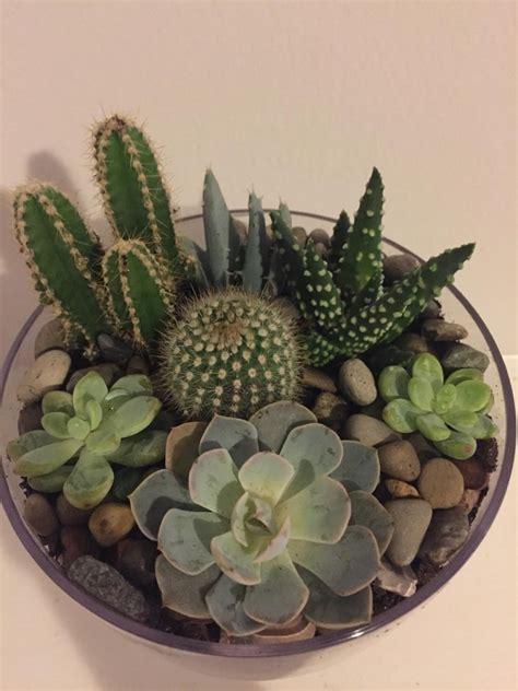 Mini Cactus mini cactus terrarium www pixshark images galleries with a bite