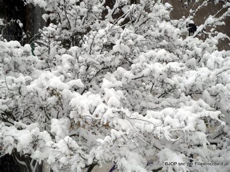 fiori di neve fiori di neve i testi della tradizione di filastrocche it