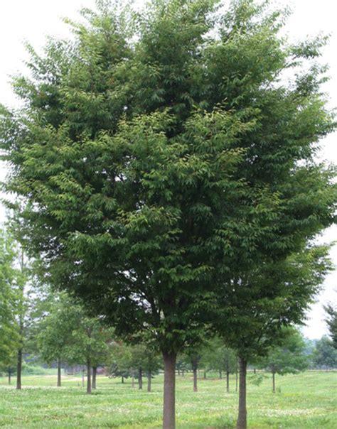 Zelkova Green Vase by Shade Tree List Dammanns