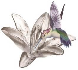 Hummingbird tattoos designs high quality photos and flash designs of