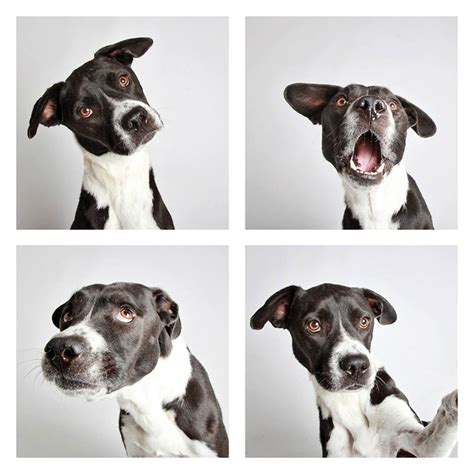utah humane society dogs this photographer does photo booths for dogs to increase adoption and it s working