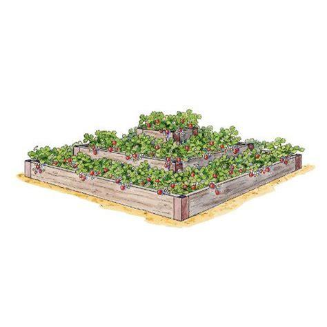 growing strawberries in raised beds growing strawberries in a raised bed garden ideas pinterest