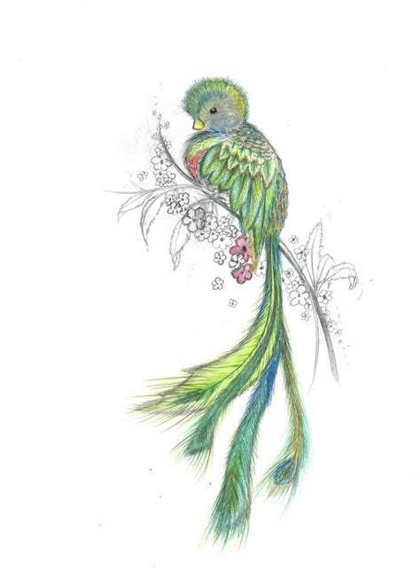 watercolor quetzal tattoo 25 best ideas about quetzal on