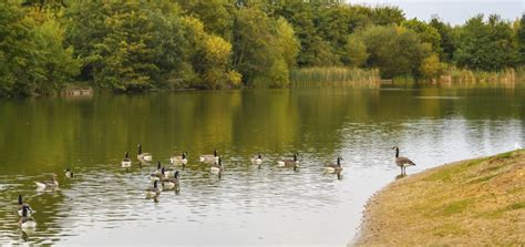 thames river activities guide to activities beside the river thames park inn by