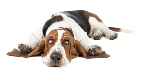 imagenes animales sin fondo mi perro no puede correr