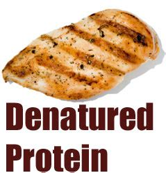 a protein can become denatured when denatured protein