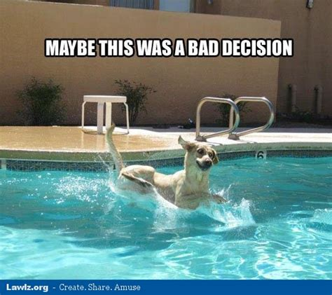 Swimming Pool Meme - meme funny dog swimming bing images