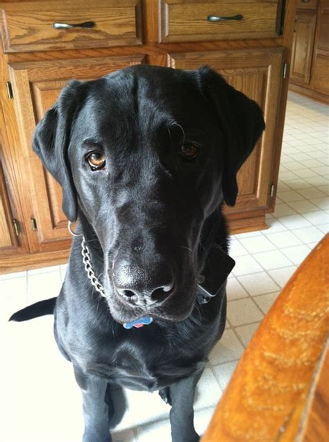 dogs nails scratching hardwood floors hardwood floors a