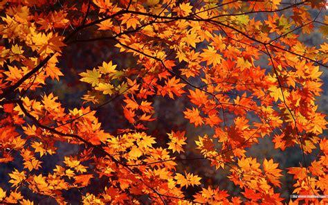 tumblr themes free autumn autumn desktop wide wallpaper mega wallpapers