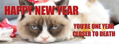cat happy new year merry happy new year 2018