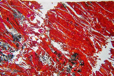Piemontite Thin Section by Piemontite Braunite Thin Section Microscope Slide Geosec