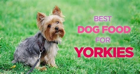 yorkie picky eater 17 best images about board on exercise sun sign and hiit