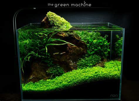 Aquascape Aquarium by Rock Aquascape Journal By Findley The Green